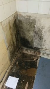 Black Mould treatment